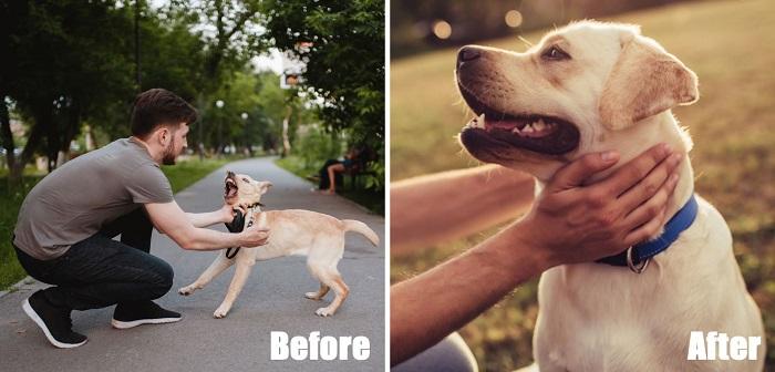 best budget Stop Dog Barking Device